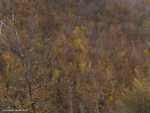 Consiglio trekking da fare in autunno
