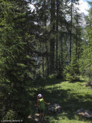 I boschi intorno al lago di Braies