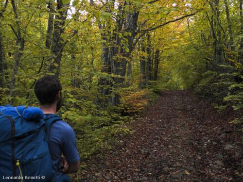 La natura gentile dei boschi