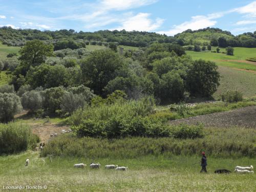 Molise. Terra di pastorizia
