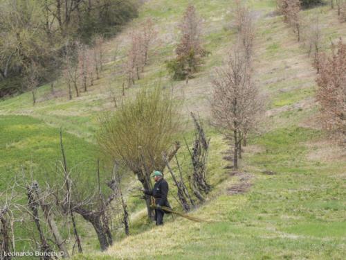 Potature primaverili nell'alta val Tiberina