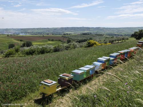 Schiera di arnie d'api sulle colline