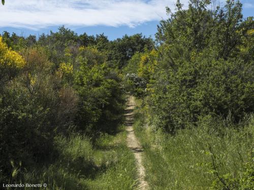 Sentiero impervio tra le ginestre
