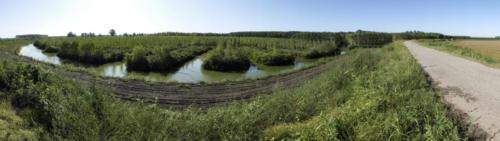 pioppicolture sul fiume Oglio.